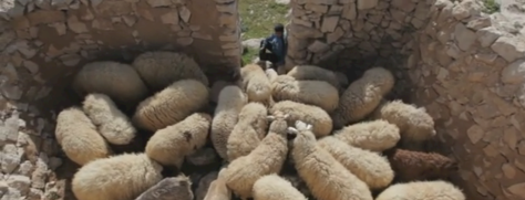 sheepfold2